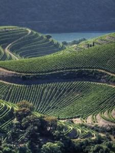 Douro - The Portuguese Wine